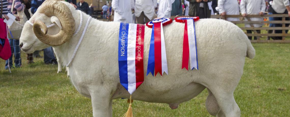 Wiltshire Horn Sheep Society Ltd (WHSS) – News, information